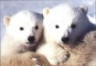 ANIMAL TRAGEDY: Cincinnati Zoo�s twin polar bears diagnosed with bipolar disorder.