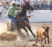 Cowboy and horse team triumph over baby cow again.